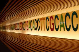 DNA SPAZZATURA