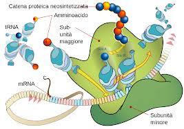 proteina funzionale